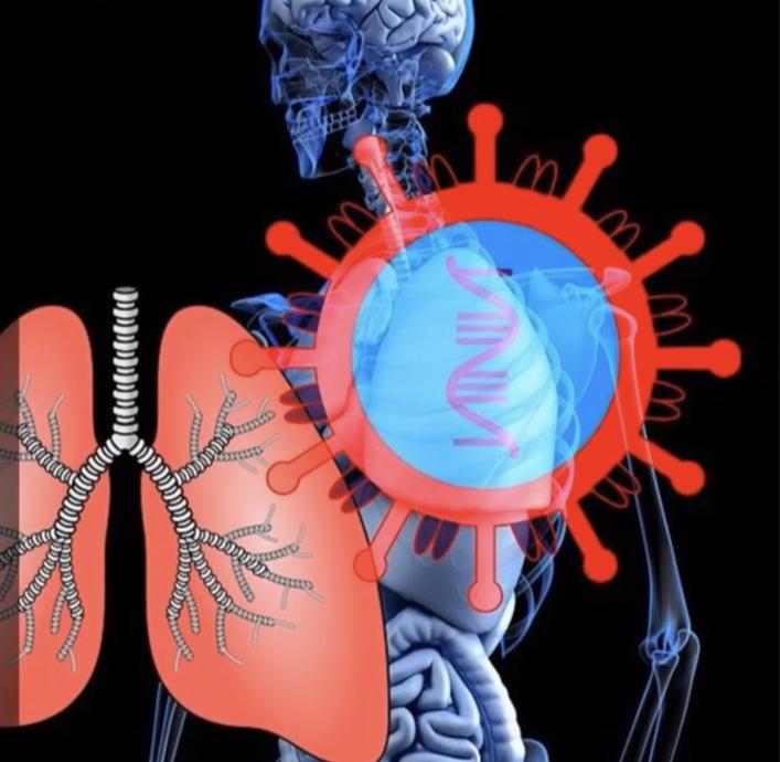 Lunge-Virus-Corona
